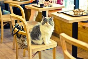 cat_cafe_cnt_21feb13_flickr_ceruleansky_b_646x430